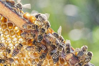 Speedy's Beehive Image