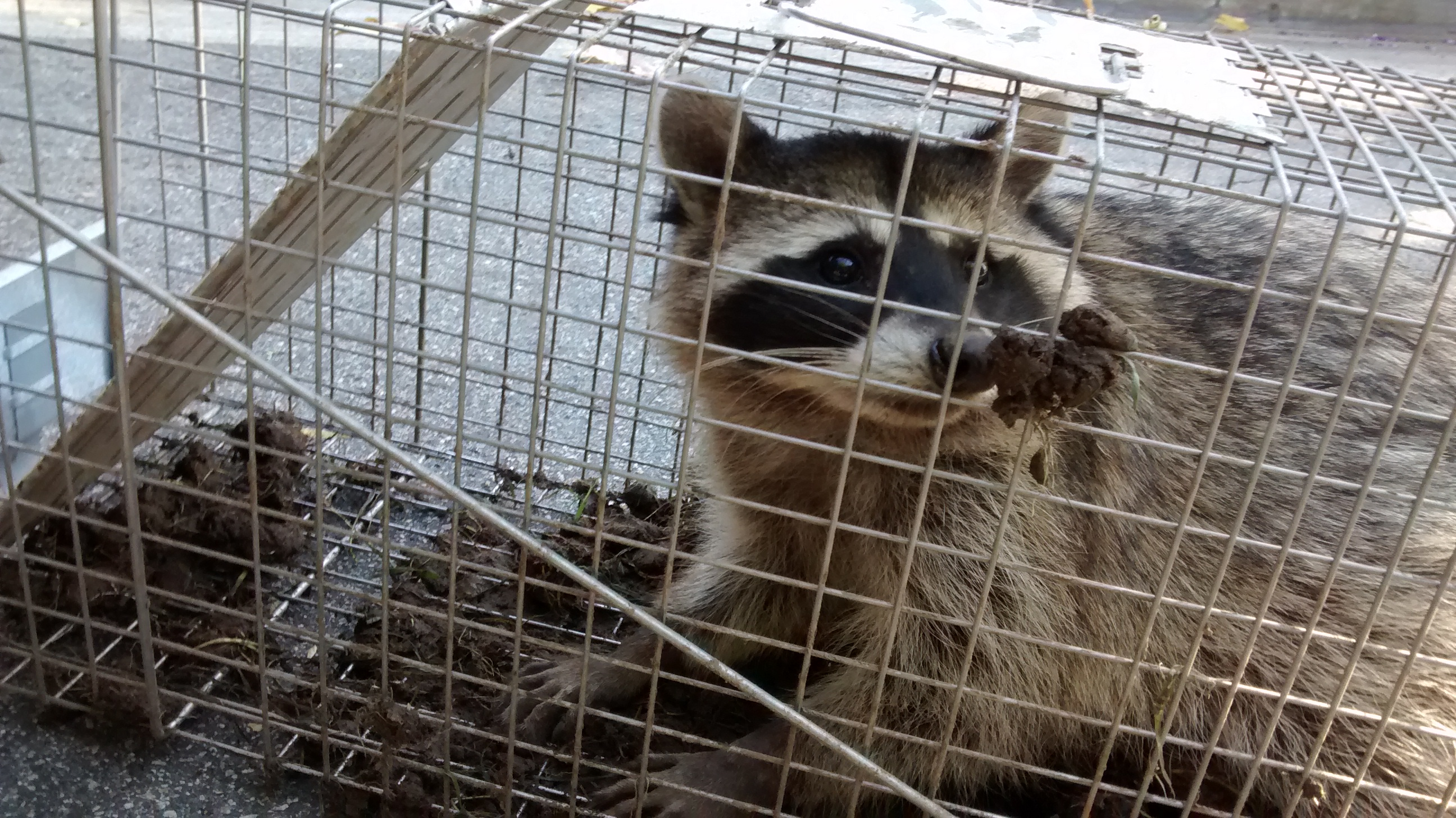 Wild Animal Removal Services