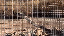Animal Fencing Preventing Snake Entry