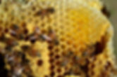 Beehive Removal Services