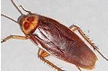 American Cockroach Exterminating Service
