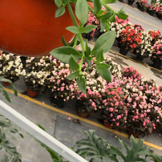 Plantas - 8.jpeg