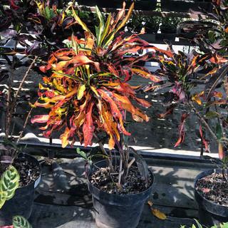 Plantas - 12.jpeg