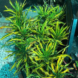 Plantas - 34.jpeg