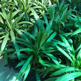 Plantas - 36.jpeg