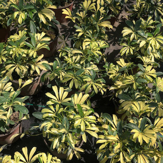 Plantas - 14.jpeg