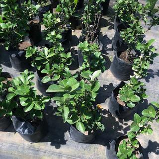 Plantas - 53.jpeg