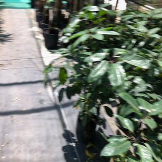 Plantas - 38.jpeg