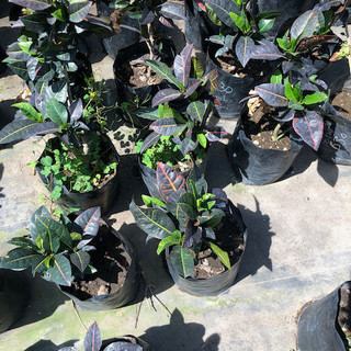 Plantas - 56.jpeg