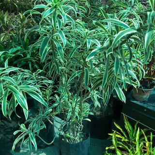 Plantas - 35.jpeg