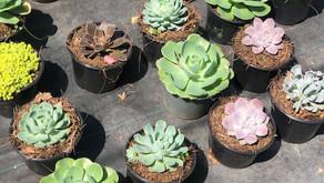 Definitivamente las plantas son las compañeras perfectas.
