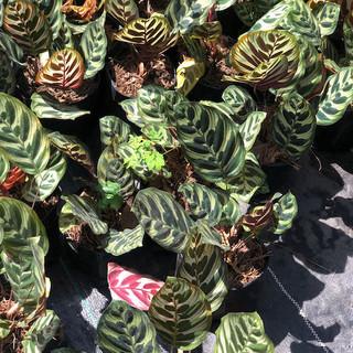 Plantas - 18.jpeg