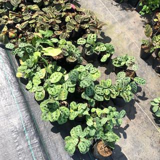 Plantas - 11.jpeg