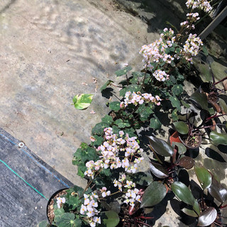 Plantas - 23.jpeg
