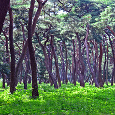 2018_trees.jpg