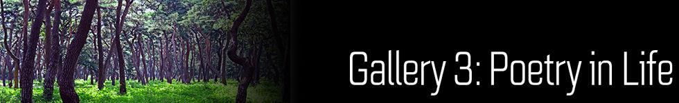 Gallery33.jpg