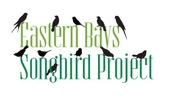 Eastern Bays Songbird Project
