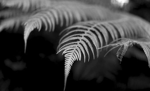 Morris-fern.jpg