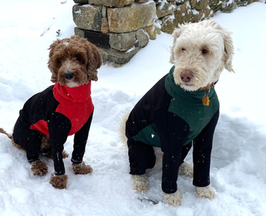 Skyler and Bodie in long sleeve dog coat