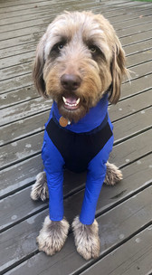 Theo in lightweight royal blue