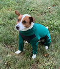 Archie long sleeved green midweight dog jacket