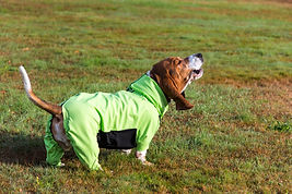 long sleeved dog jacket, dog winter coat