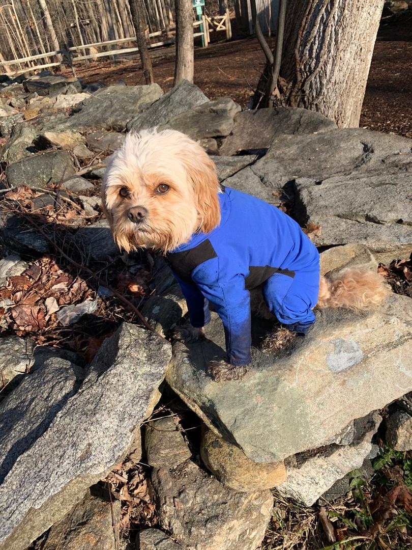 Jaxx wearing his full length dog jacket