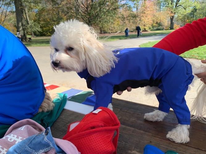Louie in lightweight blue