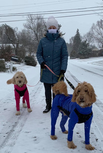 The Doods in there all seasons shell dog coats