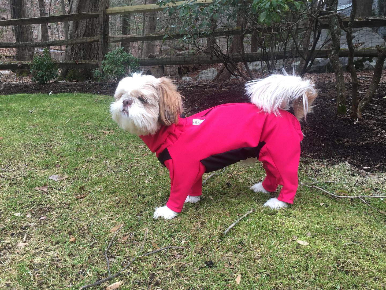 Rosie in her fleece lined dog jacket