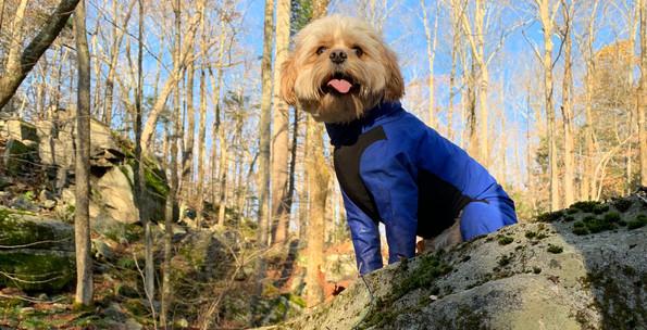 Jaxx is wearing an all season dog jacket