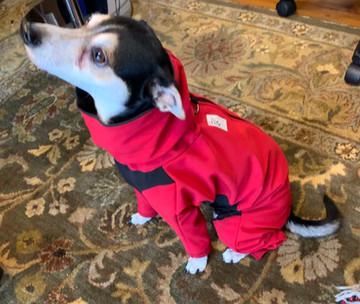 Eddie Joe wearing a full body dog jacket