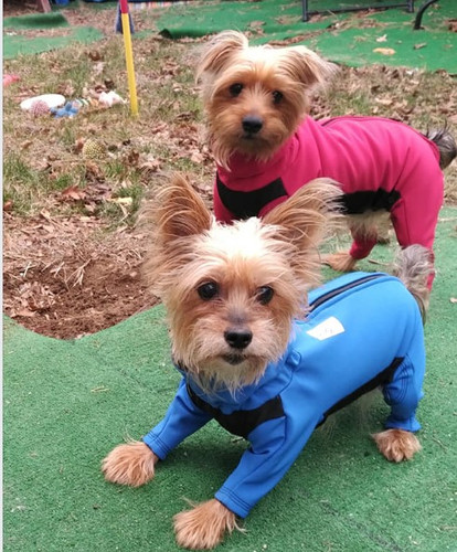 Bella and Mia wearing warm winter dog coats