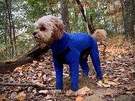 Jaxx in a royal blue shell jacket
