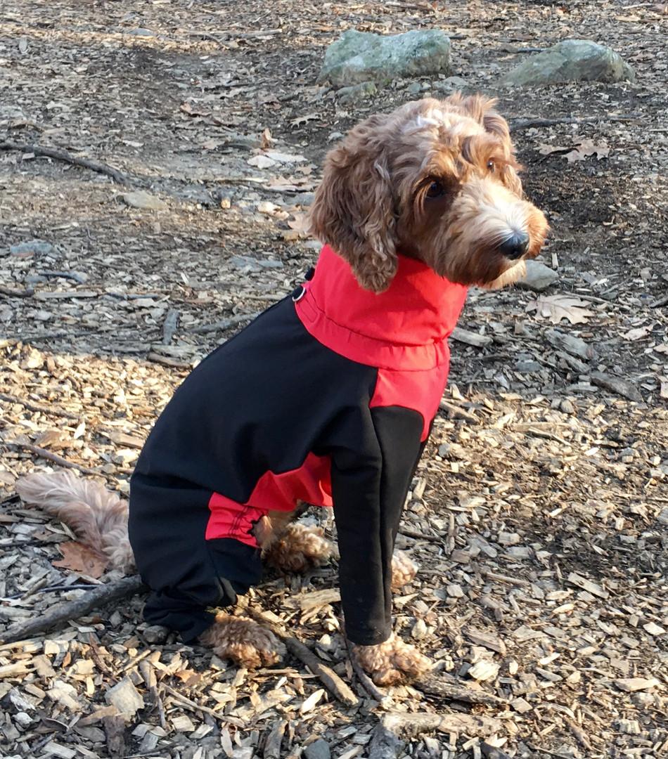 Skyler in her long sleeved dog coat
