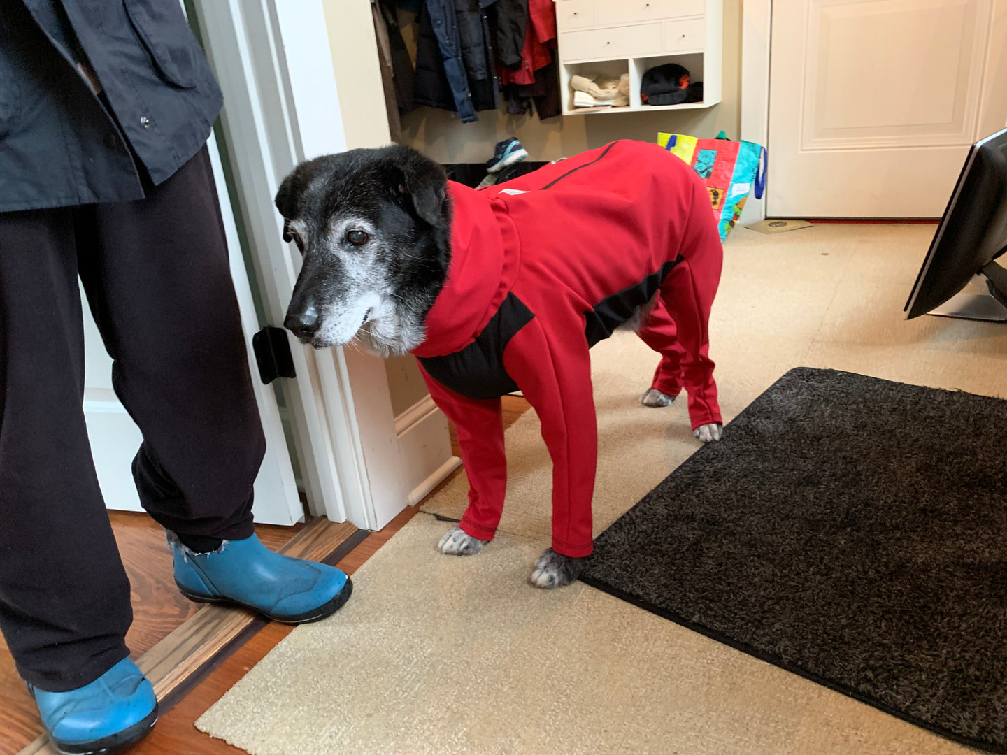 Winter in his insulated long sleeve dog jacket