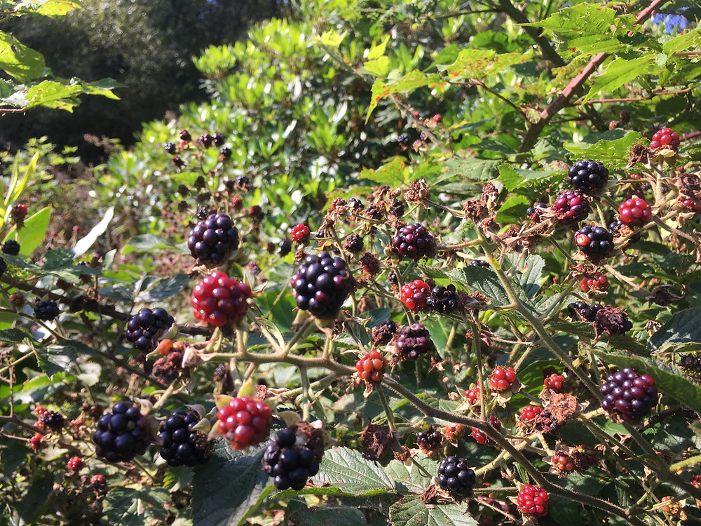 Soft fruit in Scotland, Recipes for apple pie