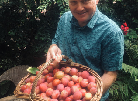 the best plums to grow in Scotland
