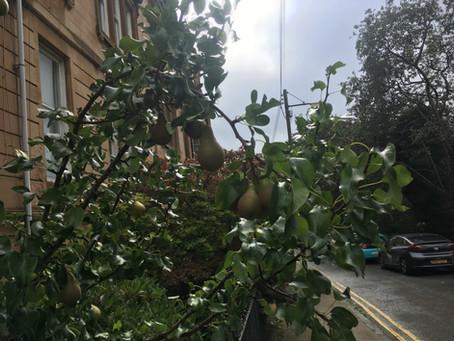 An apple tree in every street