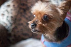 Long Island Doggie Daycare