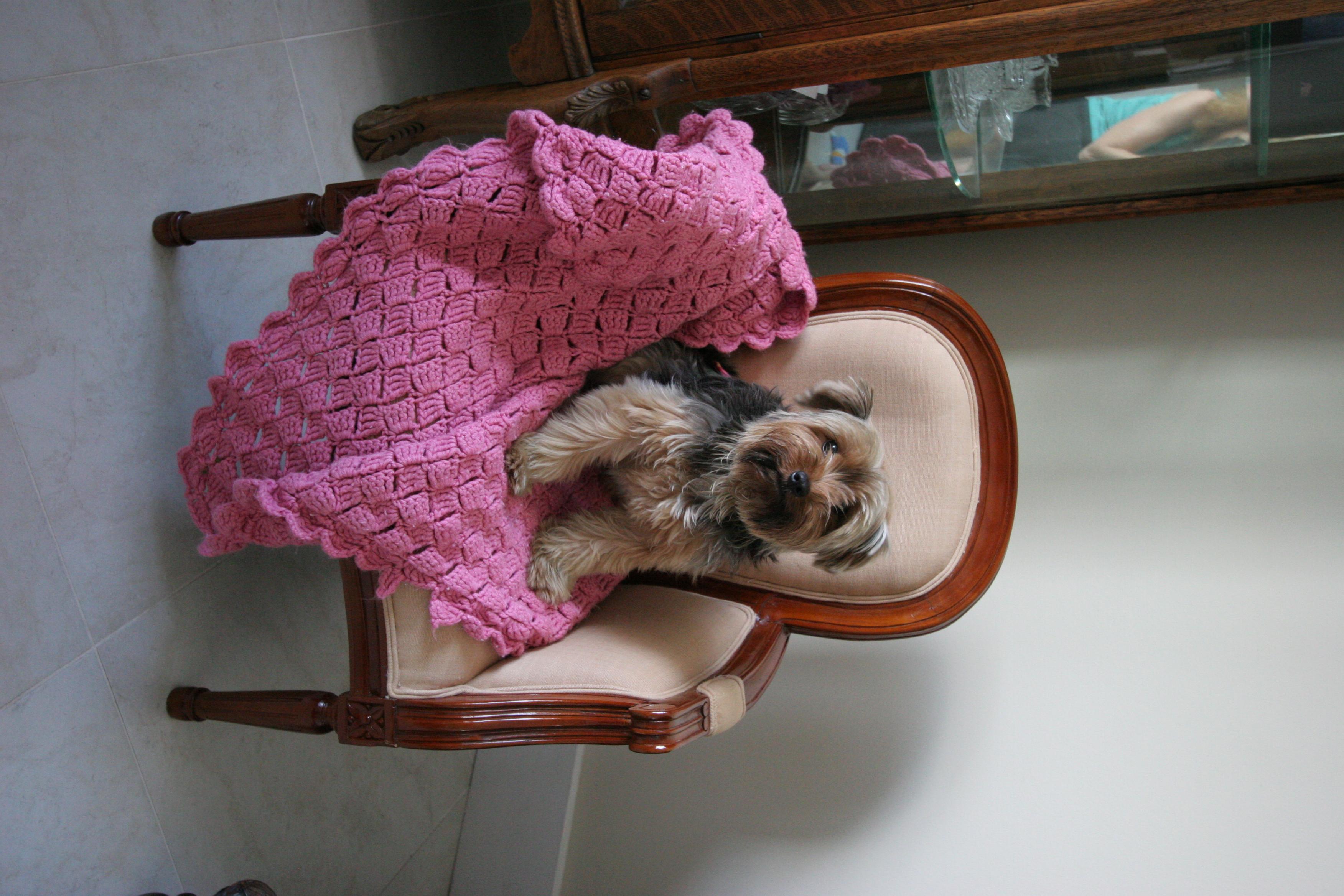 Gallery The Doggie Nanny 1
