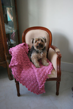 Long Island Small Dog Boarding