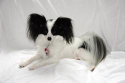 The Doggie Nanny | Long Island Dogs