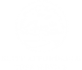 tree white.png