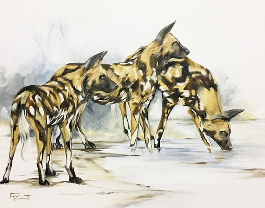WILD DOGS AT THE WATER