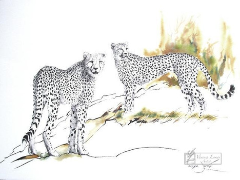 CHEETAH MOTHER & YOUNG - INDIAN INK & COLOUR INK
