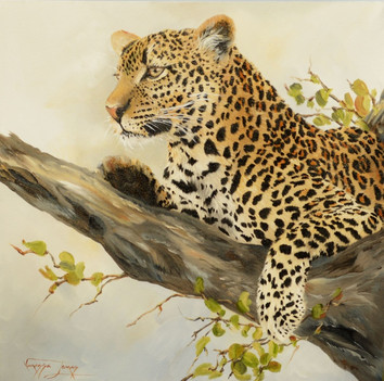 RESTING UP LEOPARD - OIL ON CANVAS - 51 x 51 cm