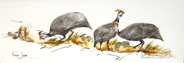 GUINEAFOWL - INDIAN INK & COLOUR INK