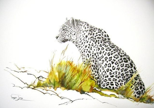 ATTENTIVE LEOPARD - INDIAN INK & COLOUR INK