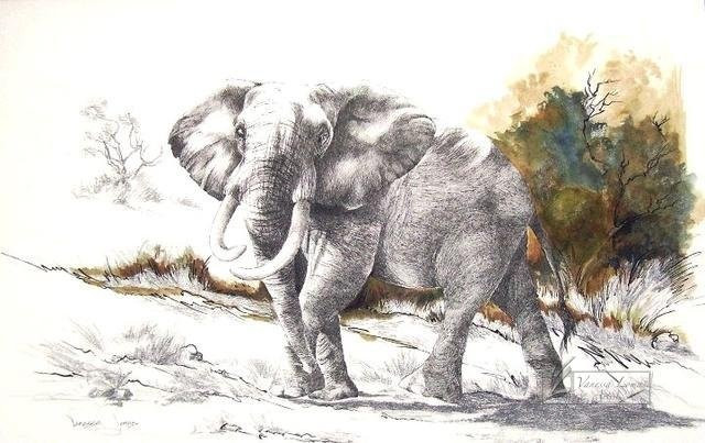 ELEPHANT CHALLENGE - INDIAN INK & COLOUR INK